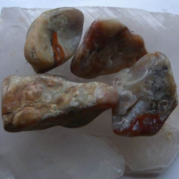 Coprolite Tumbled Stone