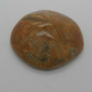 Fossil Sea Urchin-0