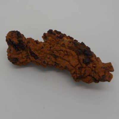 Coprolite Dinosaur Poop
