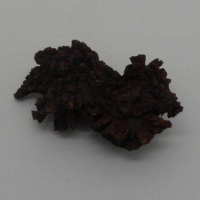 Coprolite Dinosaur Poo