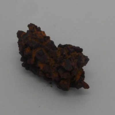 Coprolite Fossil Dinosaur Dung
