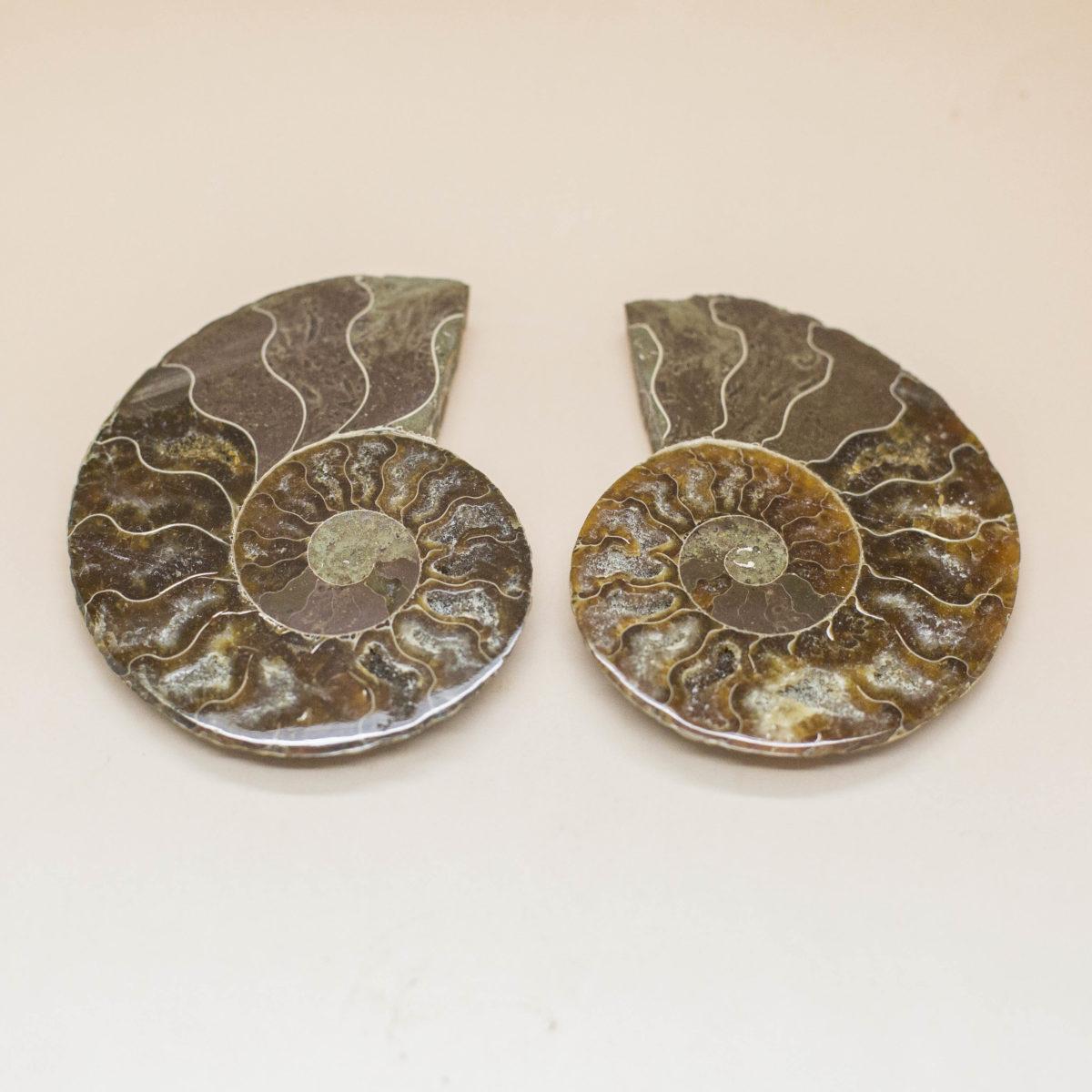 Ammonite Pair (2)