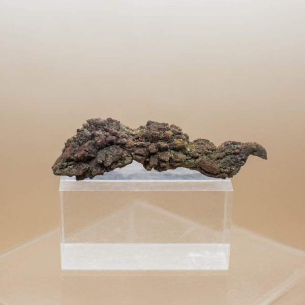 Coprolite Dinosaur Dung Fossil