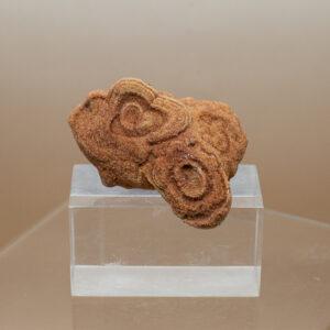 stromatolite (1)