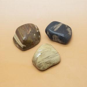 Petrified Wood Hand Stone 1